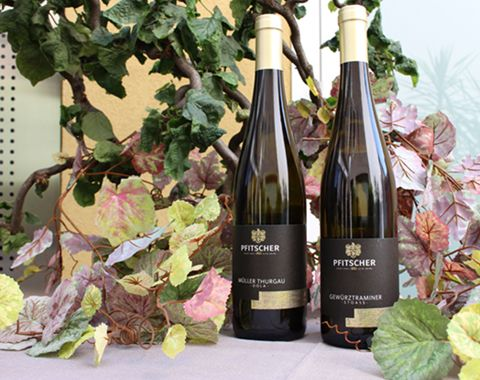 vino pfitscher gastronomia piazza